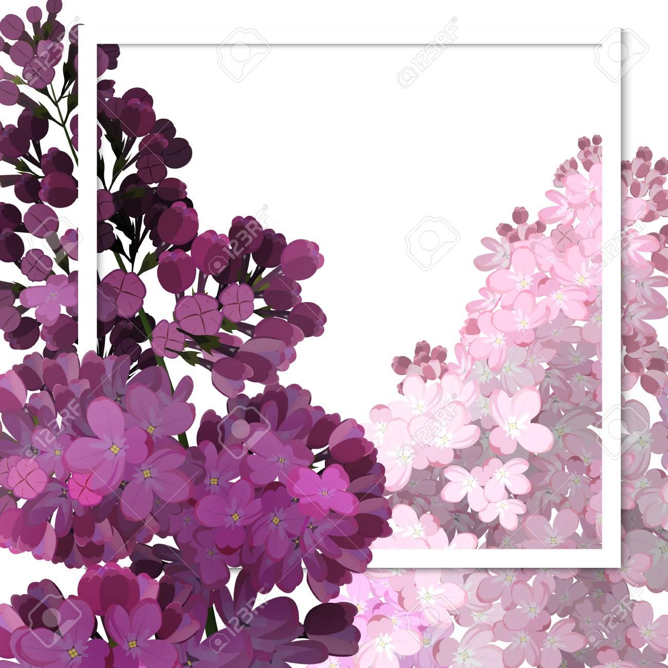 Un beau cadre passant à travers les fleurs de lilas. Illustration  vectorielle, fond blanc.