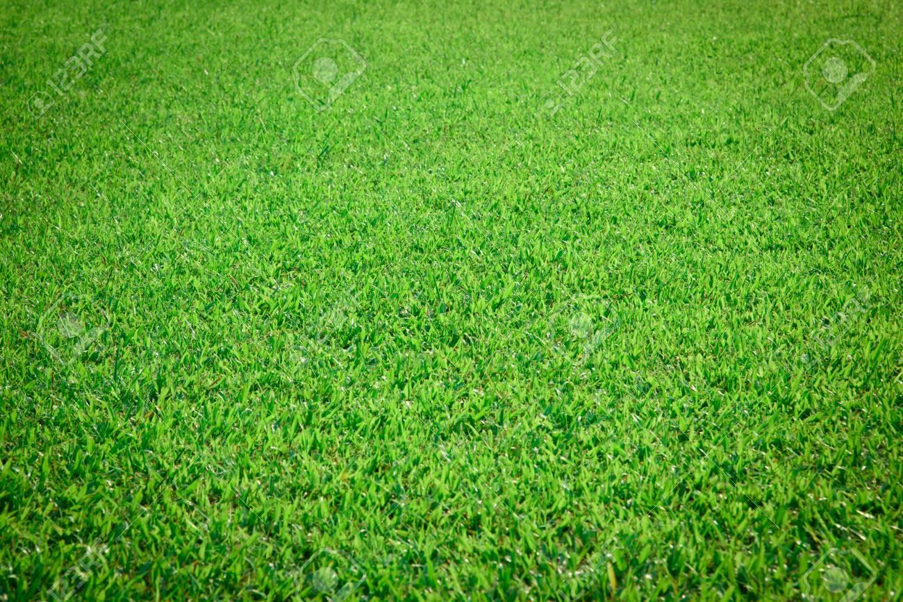 Immagini Stock Sfondo Verde Erba Image 51860968