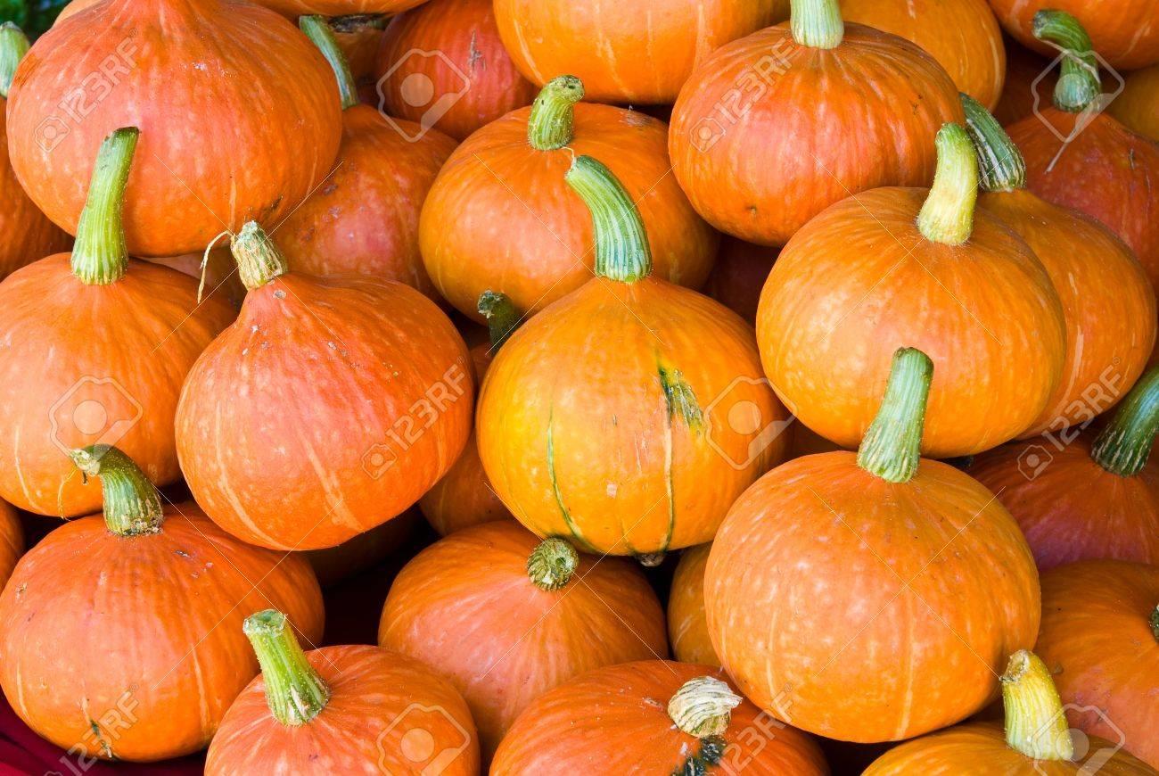 orange pumpkins  on the market Stock Photo - 8561436