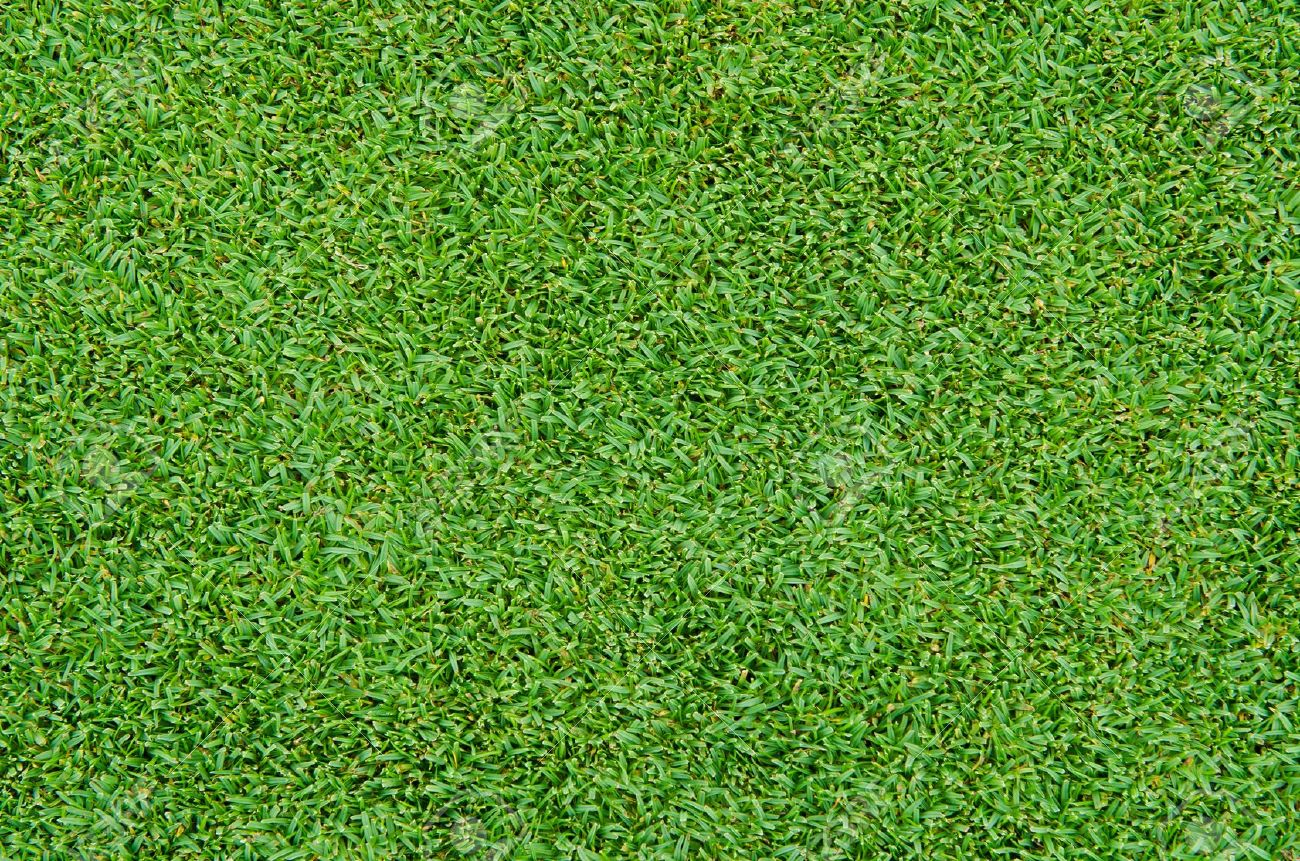 Beautiful green grass pattern from golf course Stock Photo - 10360775