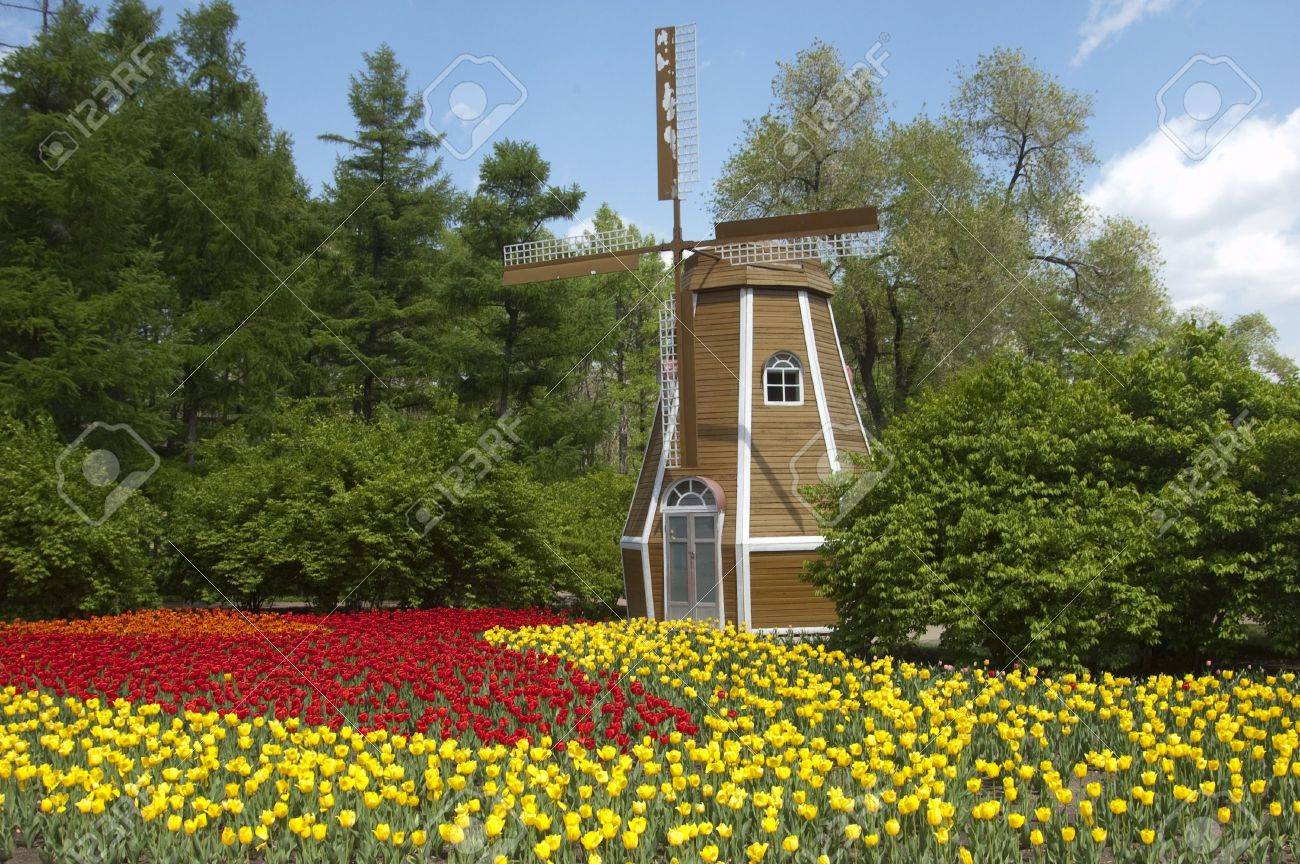 the windmill and the tulip Stock Photo - 6180264