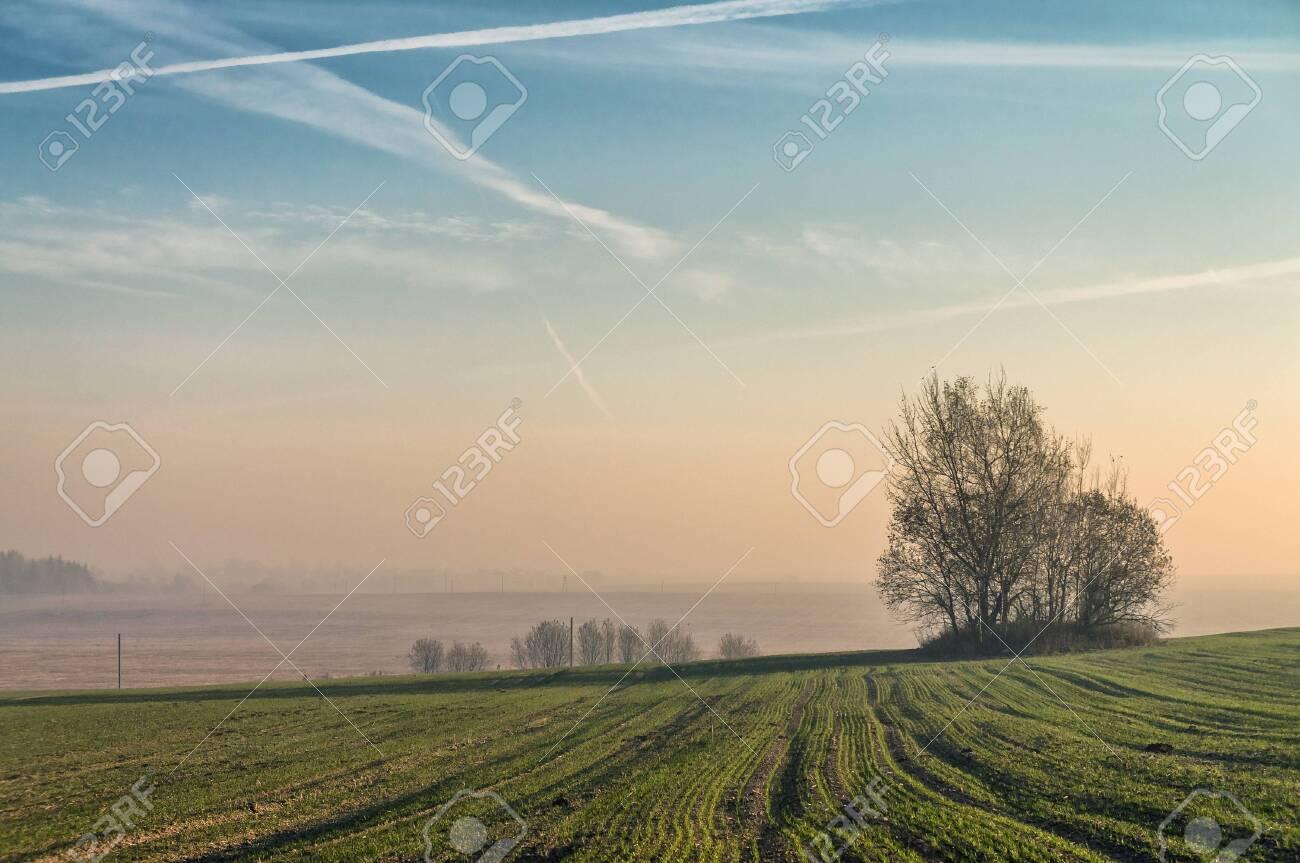 Autumn field at dawn. Fog. - 151419619