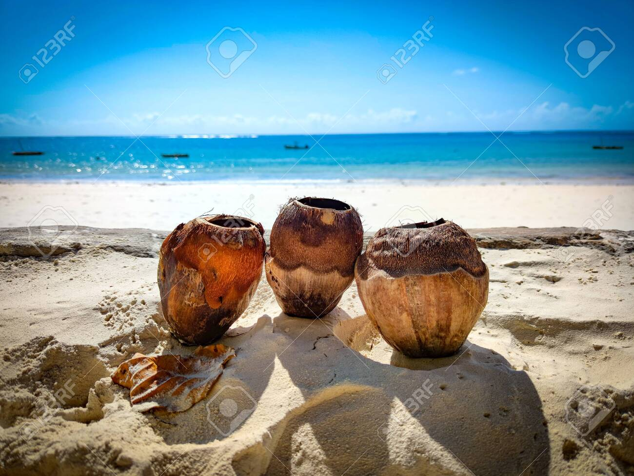 Three coconuts in the sand on a beach in Kenya, Africa. In the background is the Indian Ocean. Its a tropical paradise. - 146901060