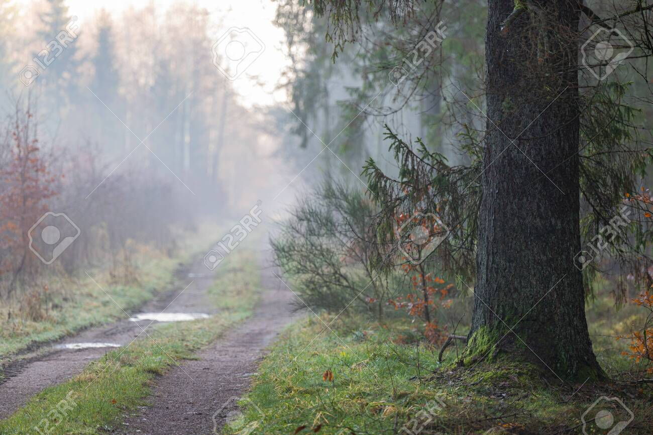 Forest road in the fog. Path leading through the forest. Autumn season. - 135193545