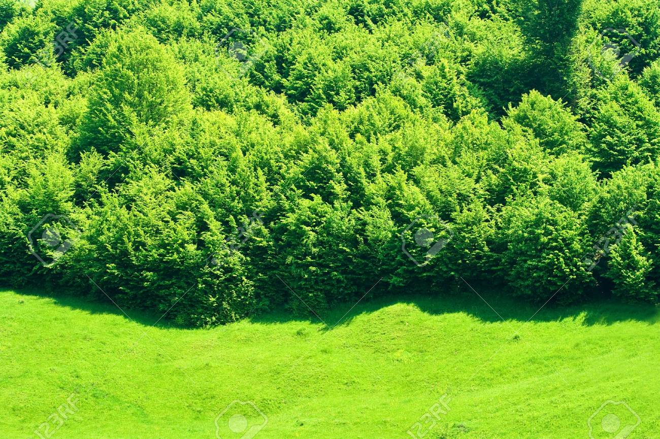 Forest at the end of a green meadow Stock Photo - 3076662
