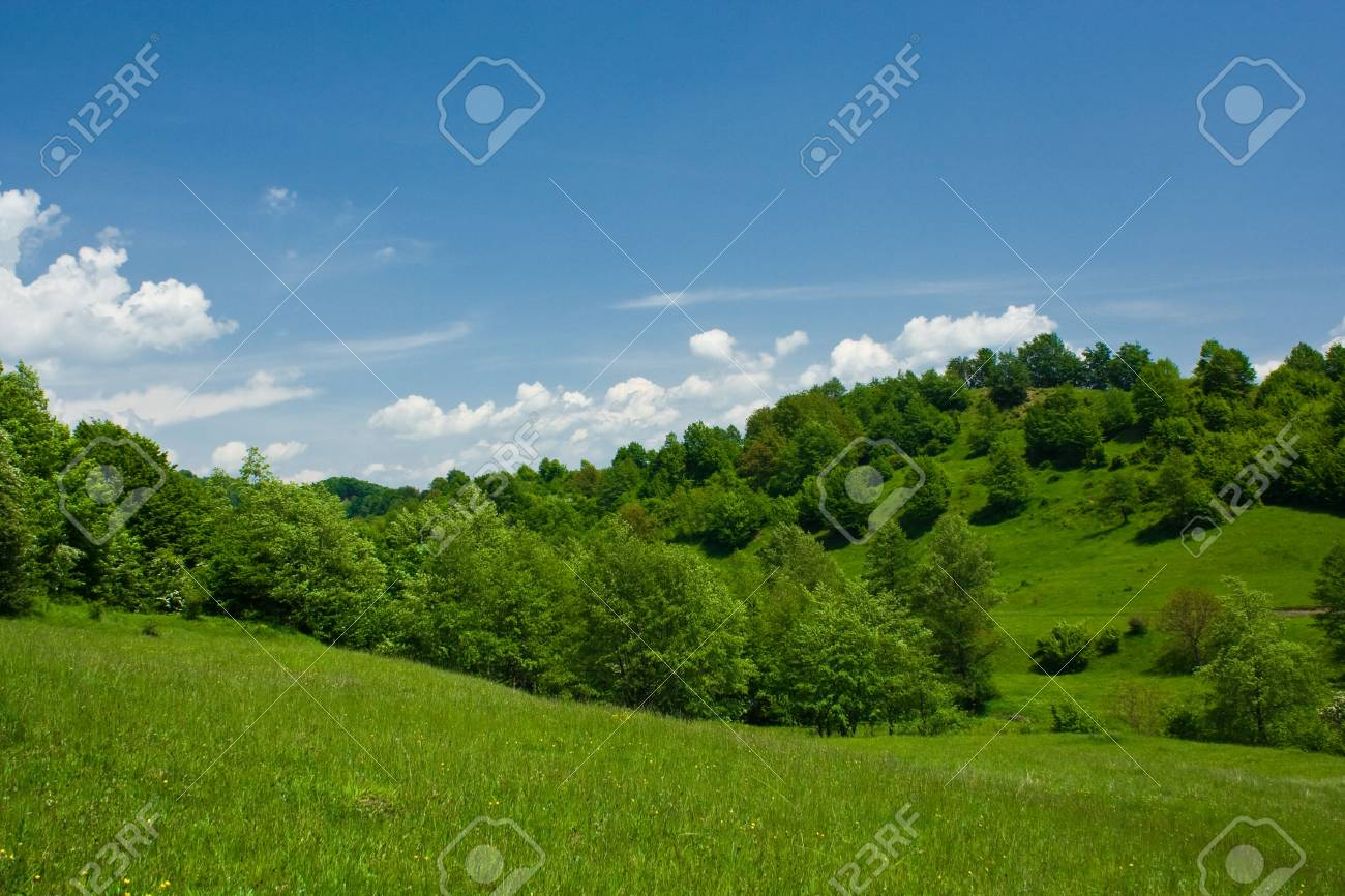 Forest in a sunny day with sky and white clouds Stock Photo - 3076657