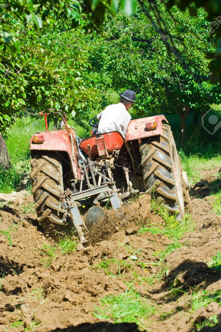 Old farmer plowing between trees in an orchard Stock Photo - 3219601