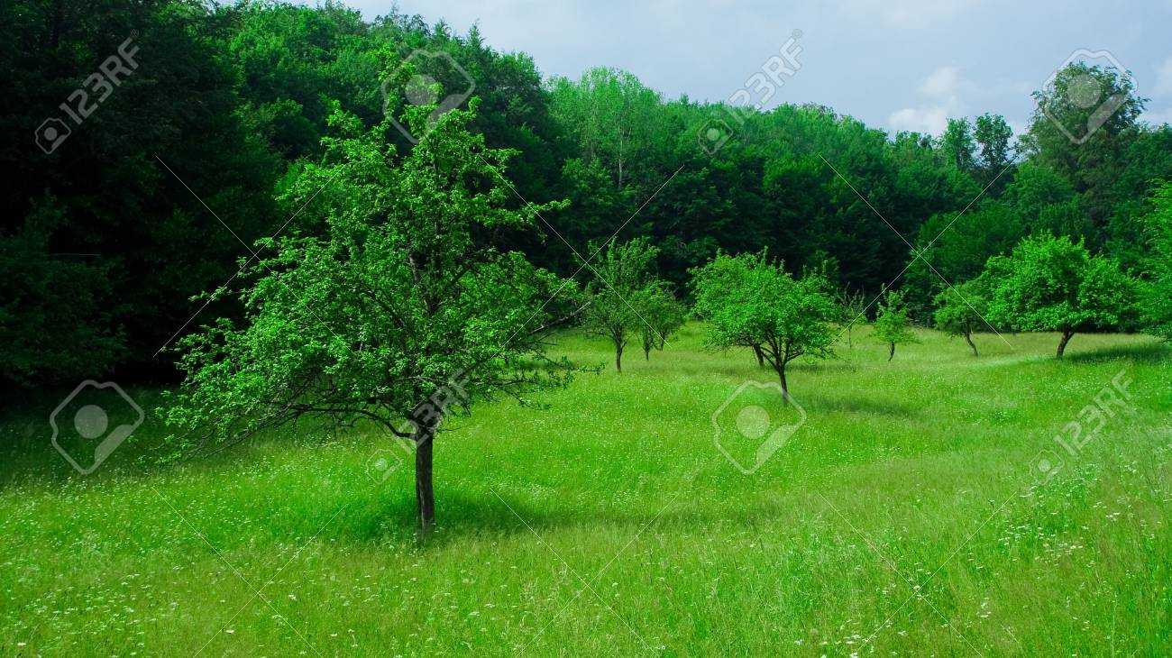 Landscape with forest and grassfield under blue sky Stock Photo - 3250749