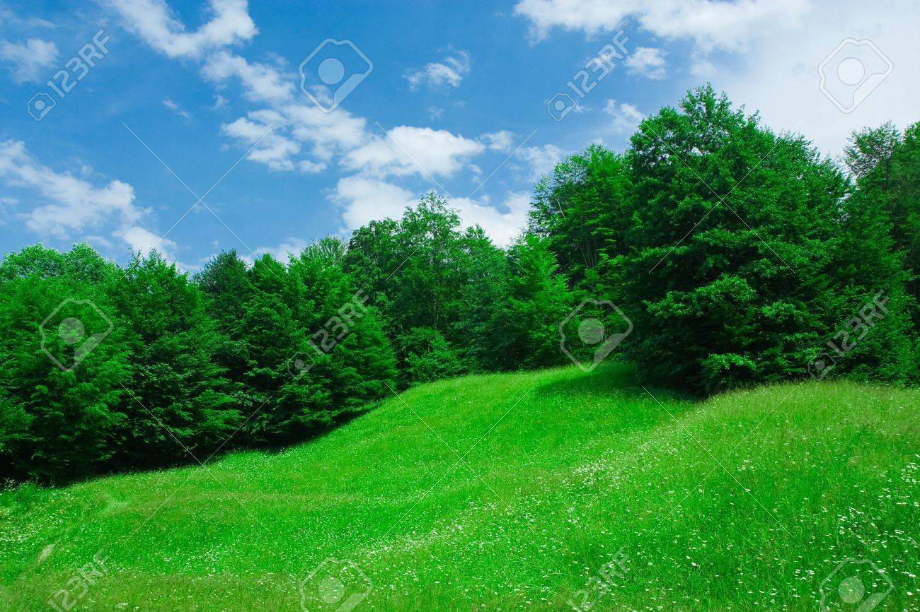 Landscape with forest and grassfield under blue sky Stock Photo - 3250764