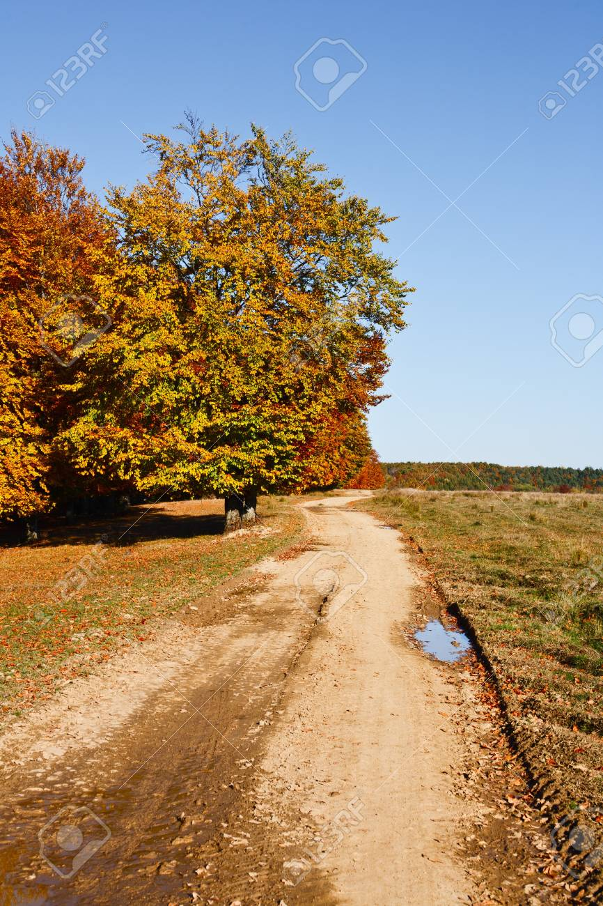 Autumnal landscape with beech trees in a sunny day Stock Photo - 8147559