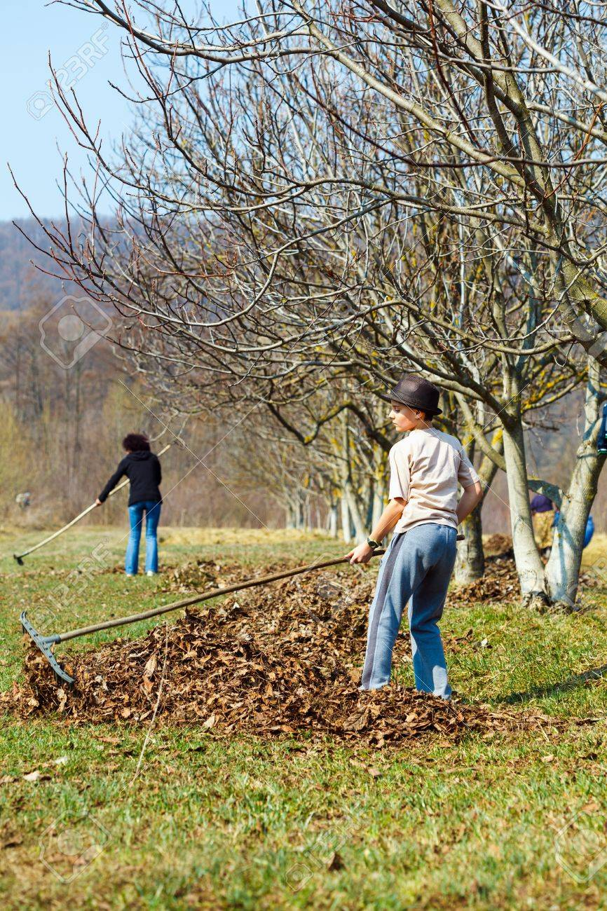 Boy and his mother spring cleaning a walnut orchard with rakes Stock Photo - 13029839