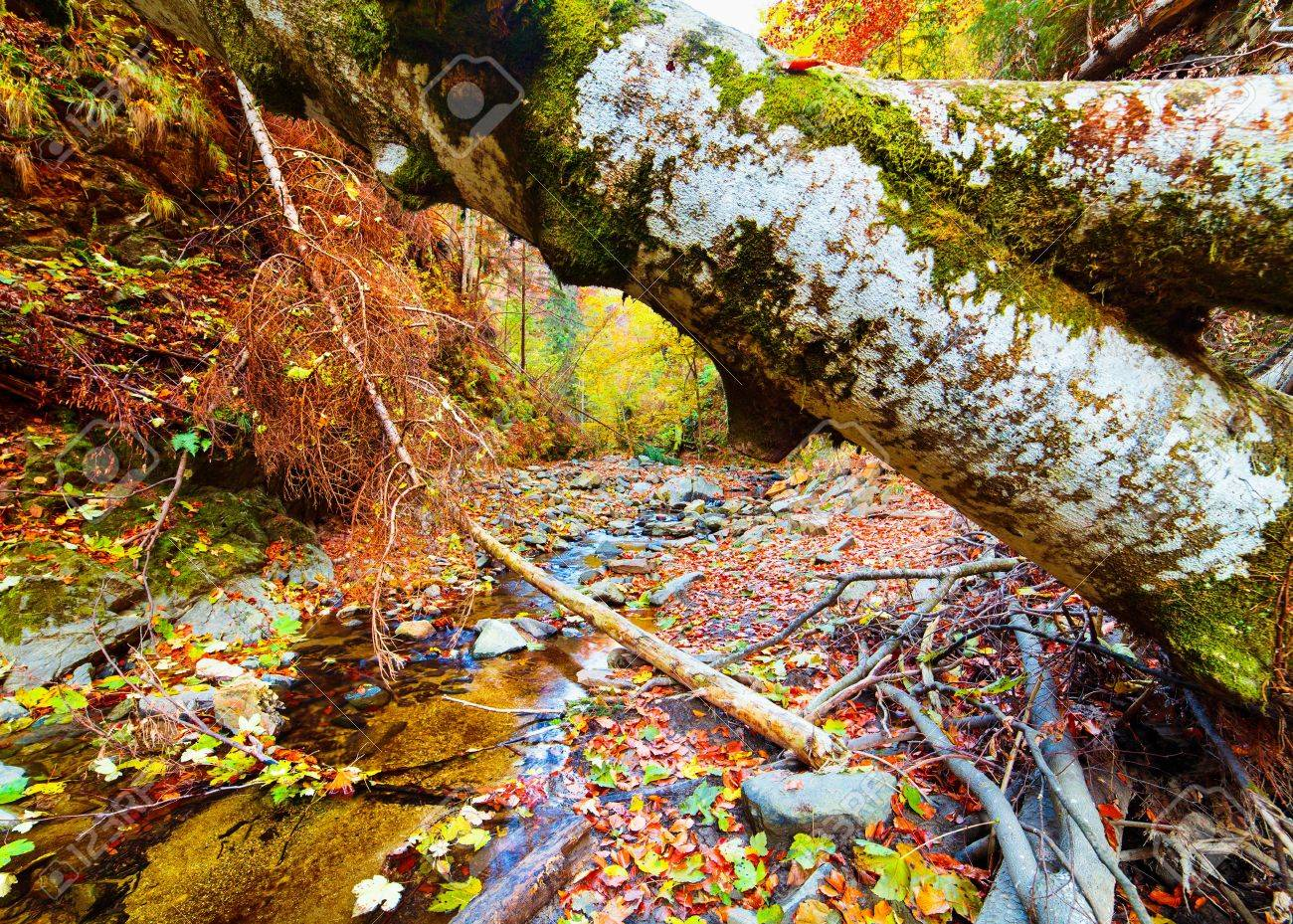 Fallen tree in a valley with a creek flowing below Stock Photo - 13539379
