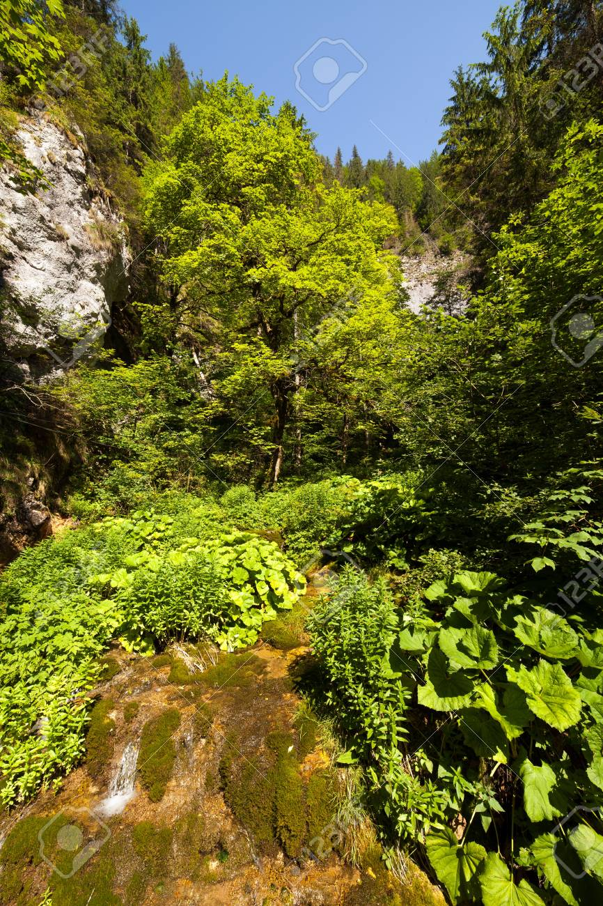 Landscape with forest in mountains and a small spring flowing below Stock Photo - 15662963