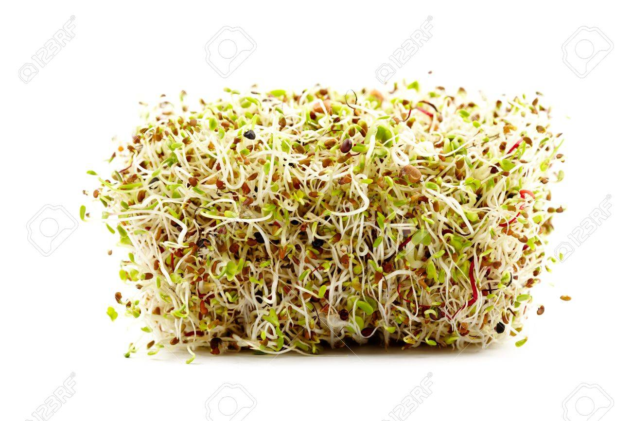 Mix of various germ sprouts isolated on white background Stock Photo - 17324526
