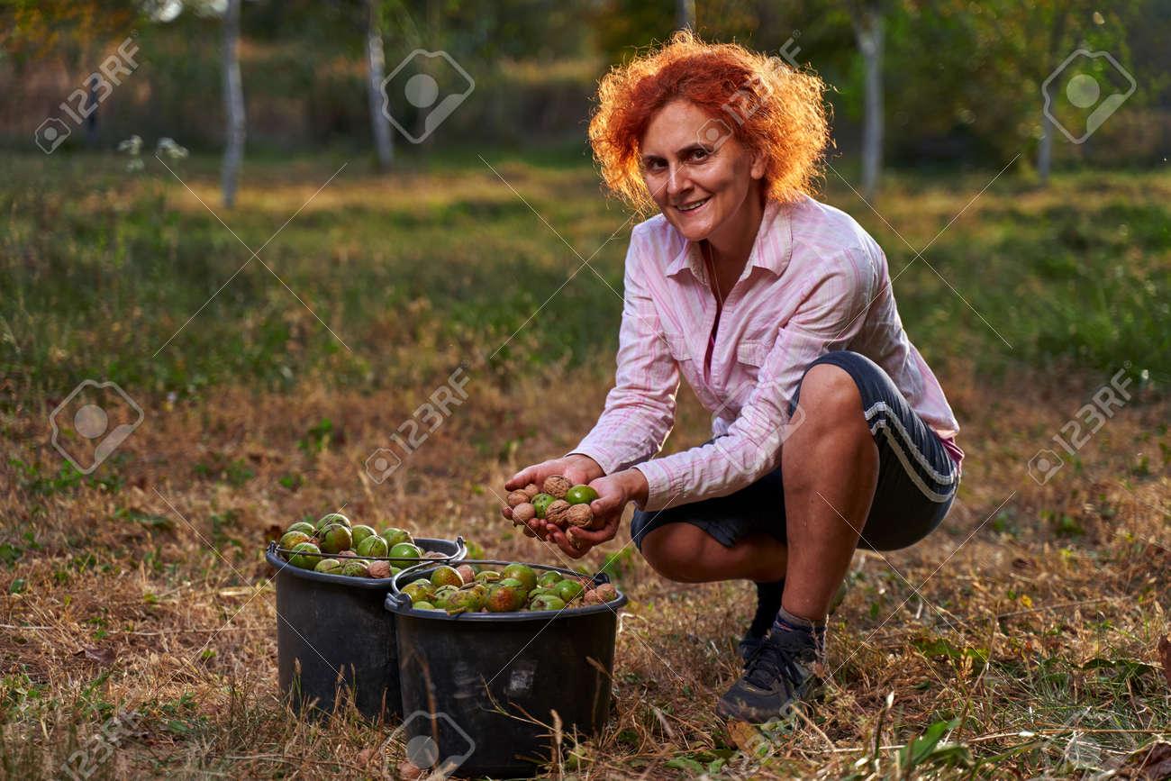 Woman farmer harvesting walnuts in buckets at sunset - 167587081
