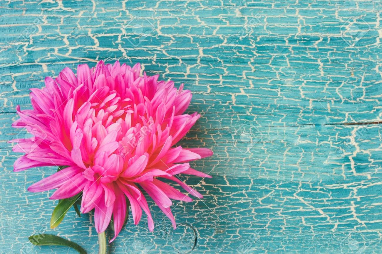 Pink Aster Flower On Turquoise Wooden Plank Free Space For Text