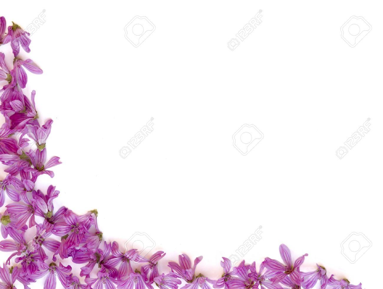 purple flowers backgrounds