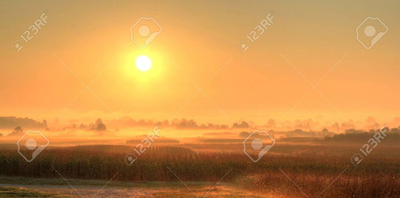 Fields in fog after sunrise Stock Photo - 10312098
