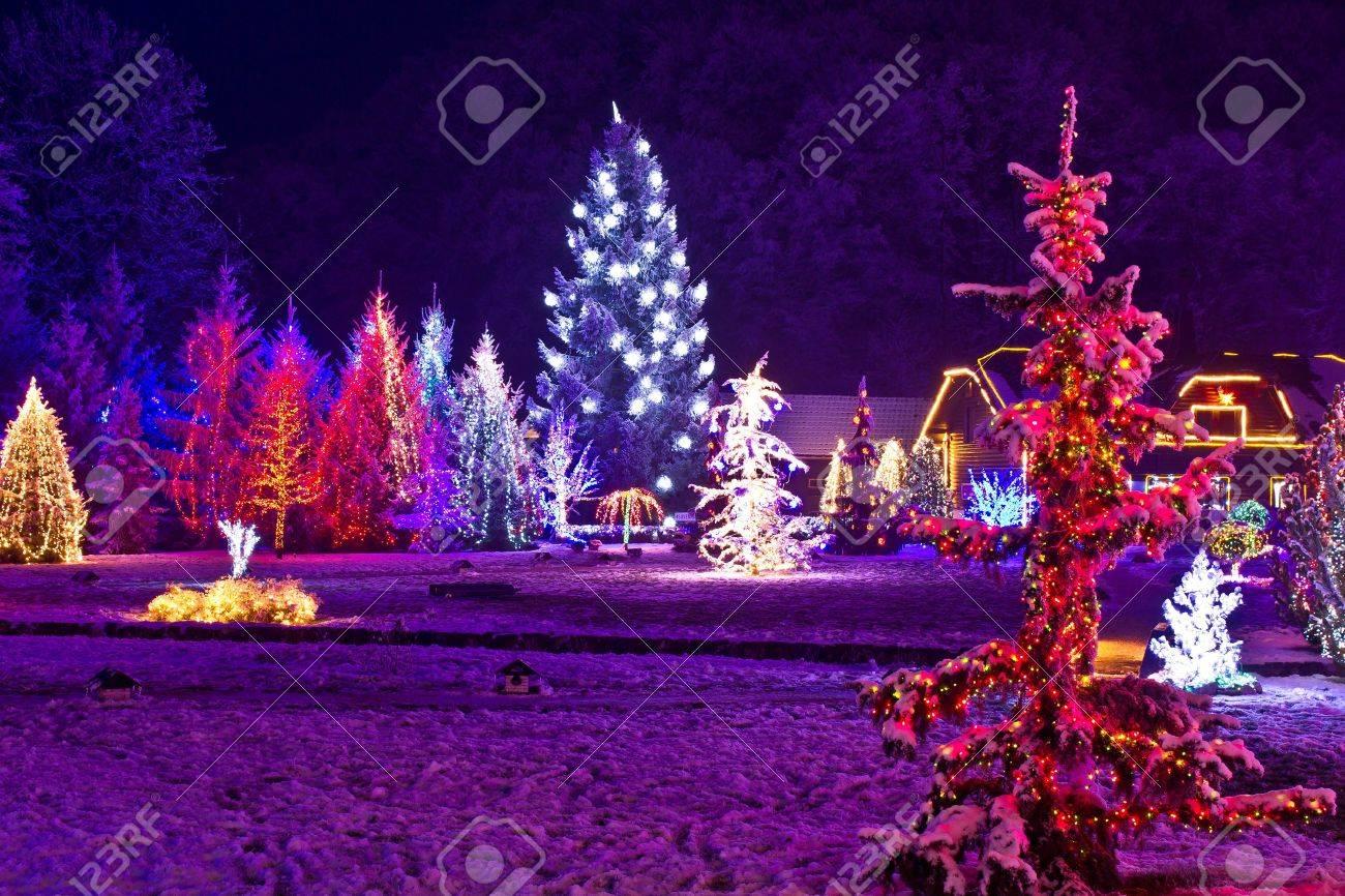 Christmas fantasy - park & forest in xmas lights, Croatia - 16172698