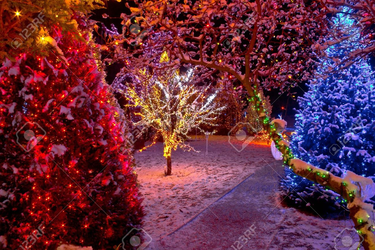 Colorful Christmas lights on trees, glowing nature - 16478676