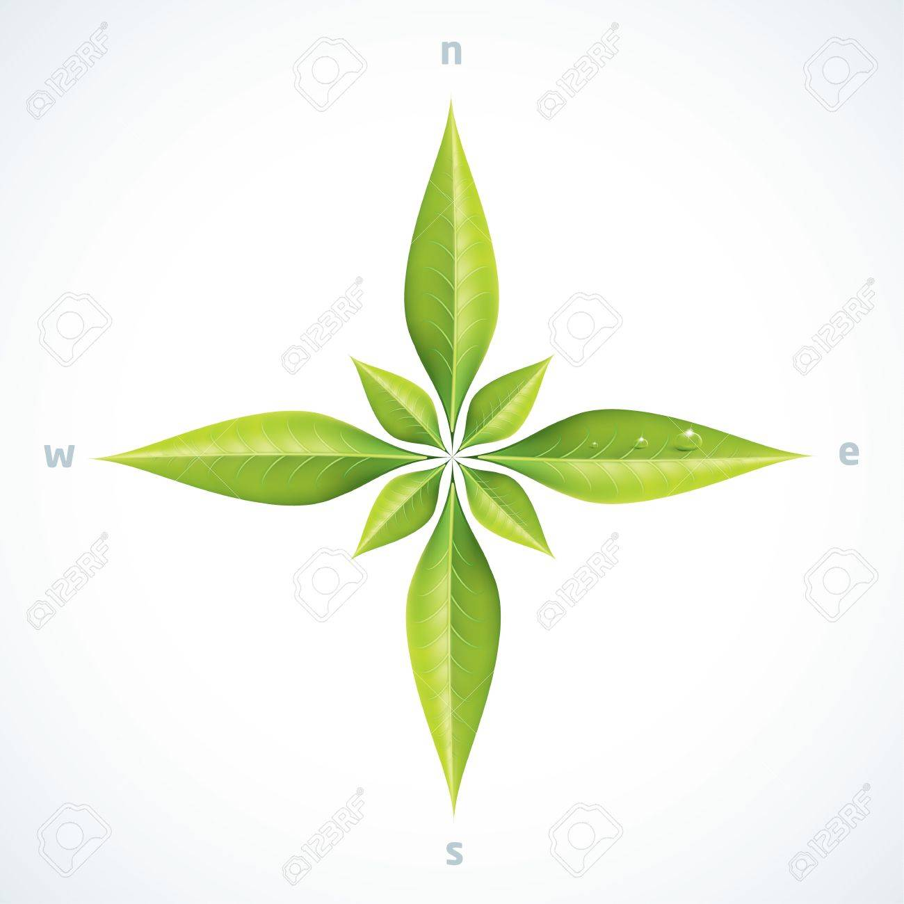 Eco green leafs compass rose - 19891825