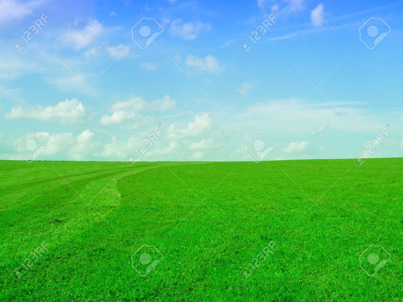 very nice image - green field and blue sky Stock Photo - 5357856