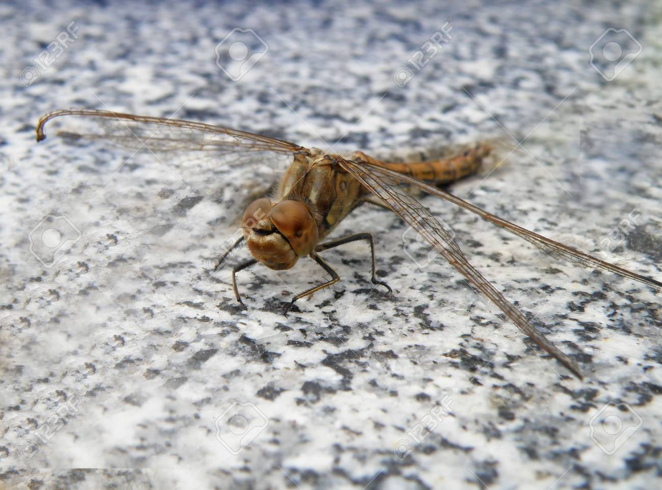 animal life - nice detail of a dragon fly Stock Photo - 5447319