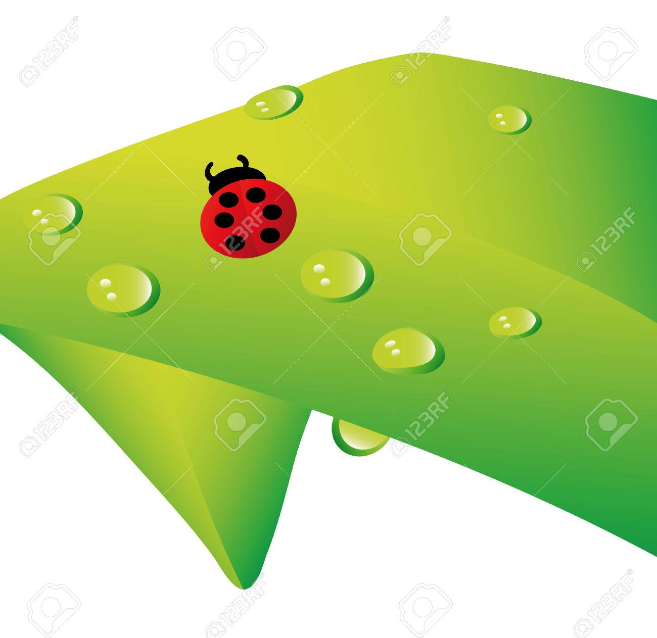 lady bug and water drops on plant isolated over white background Stock Vector - 6158230