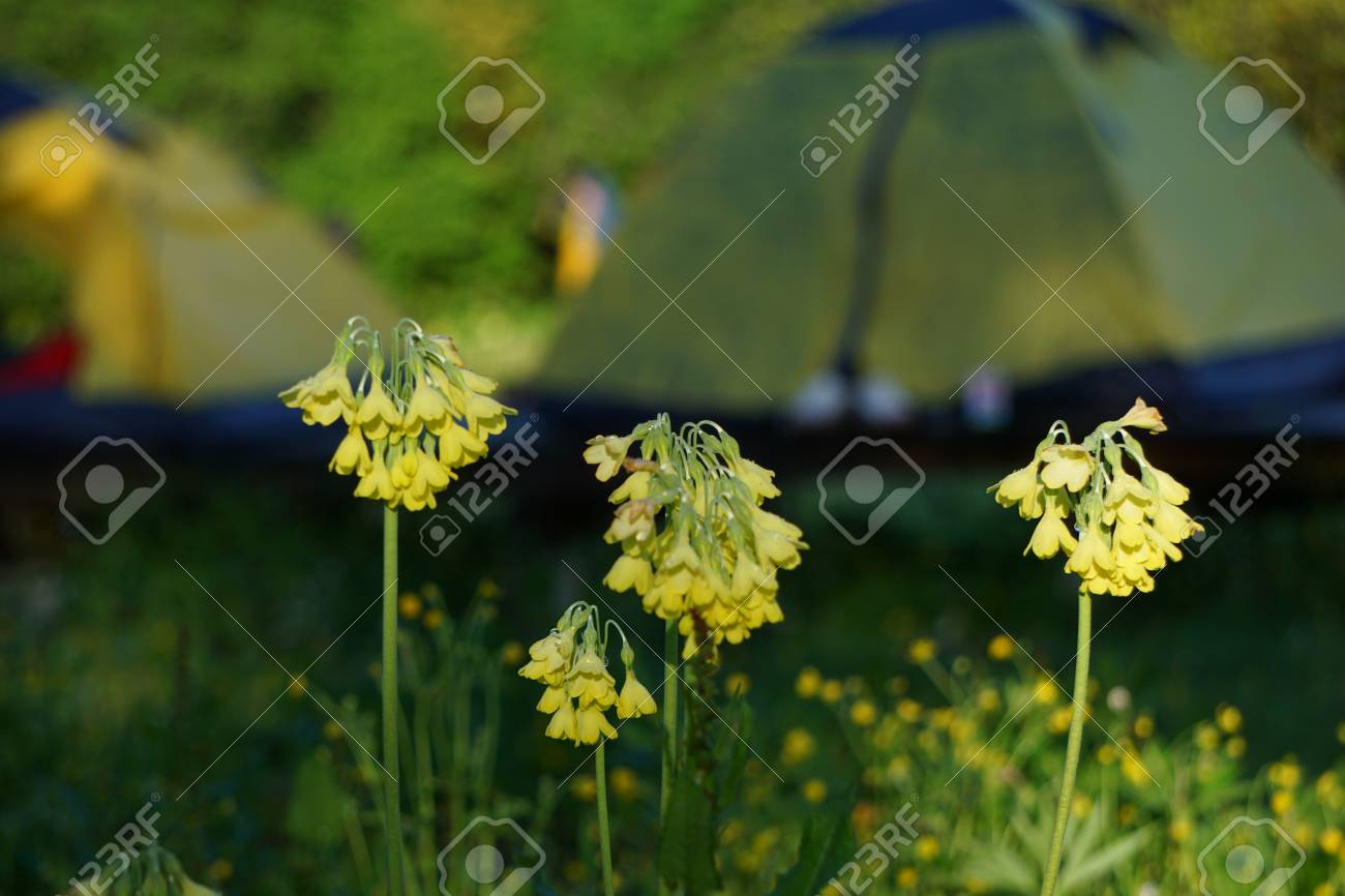 Close Up View Of Tiny Yellow Flowers Stock Photo Picture And