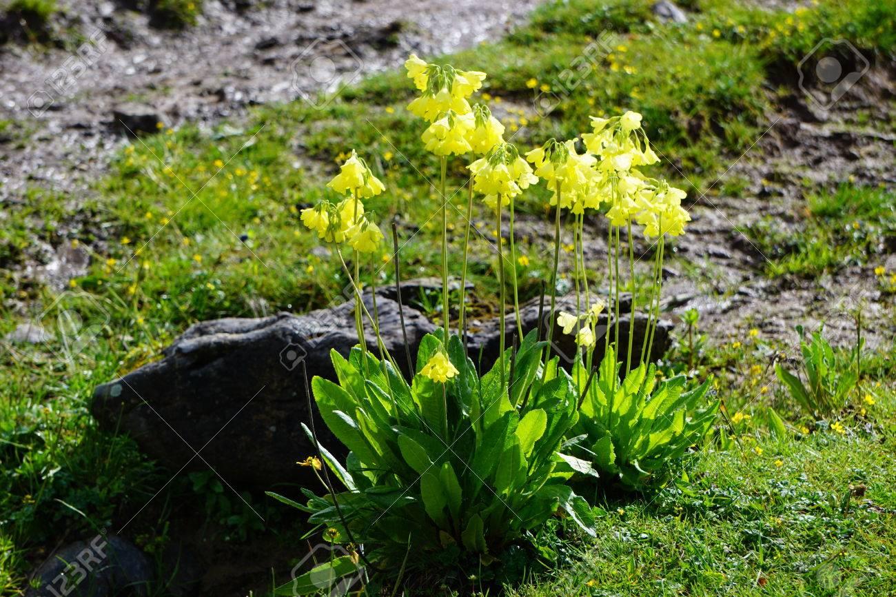 Cerrar Vista De Pequenas Flores Silvestres Amarillas Que Crecen En