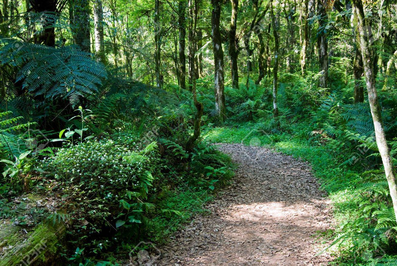Track in the atlantic rainforest with trunk and flowers. Stock Photo - 5827490