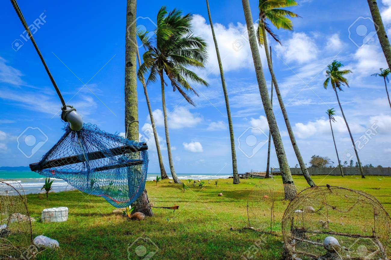 selective focus image of hammock under coconut tree near the stock