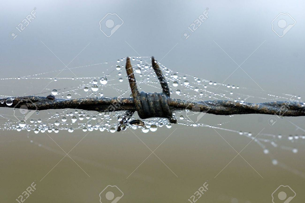 Morning Dewdrop And Spider Web On Barbed Wire Stock Photo, Picture ...