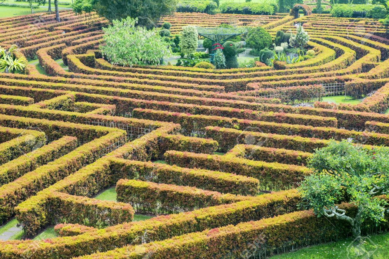 Green Bushes Labyrinth In The Garden, Bogor, West Java, Indonesia ...