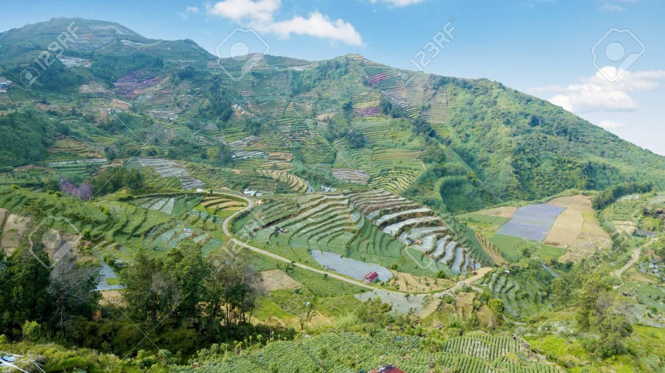 Hermoso Paisaje Aéreo De Tierras De Cultivo Verde Con Sistema De Terrazas En La Meseta De Dieng Java Central Indonesia