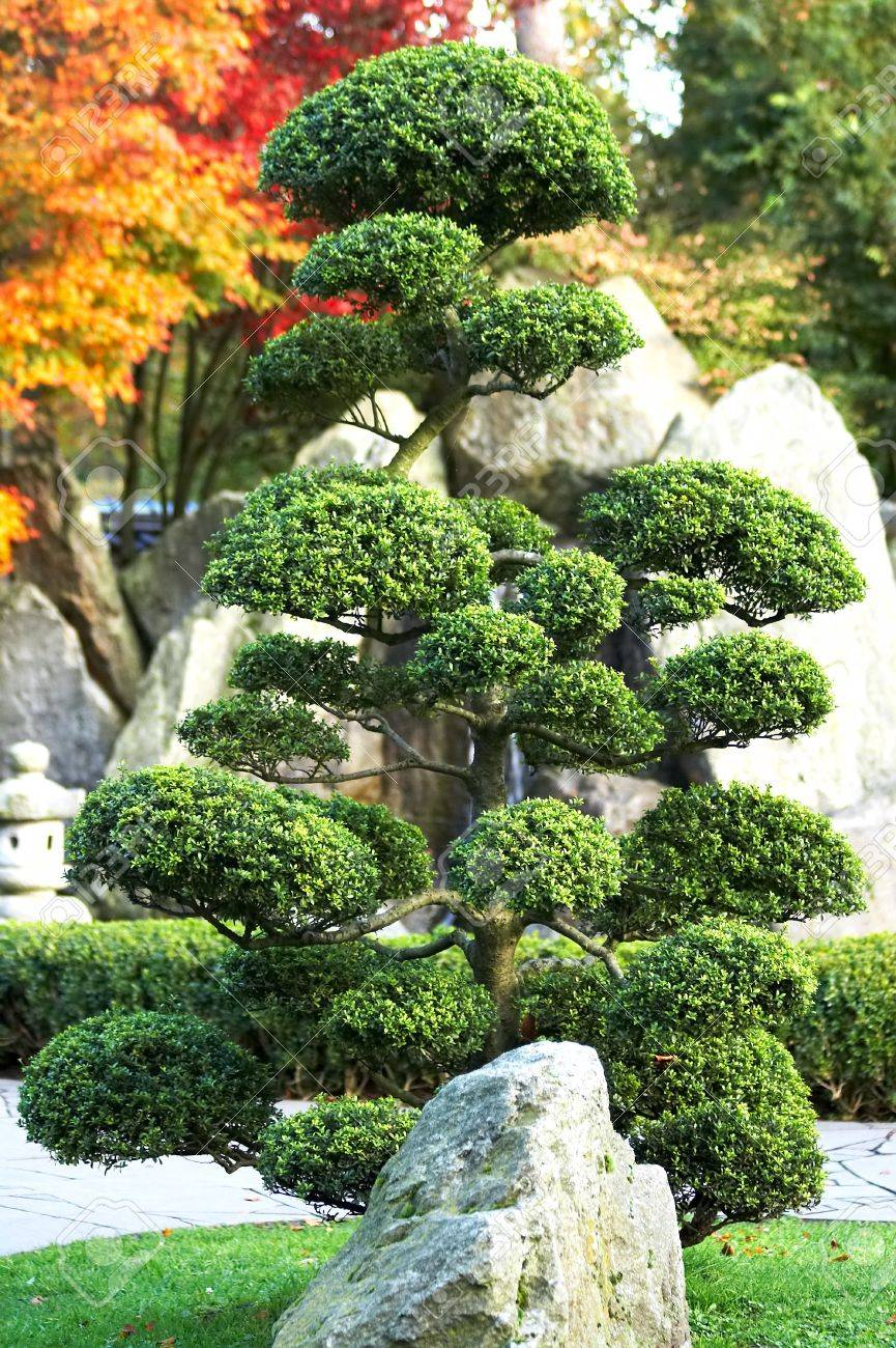 Large Bonsai Tree With Rock And Waterfall In A Japanese Garden Stock Photo Picture And Royalty Free Image Image 4396320