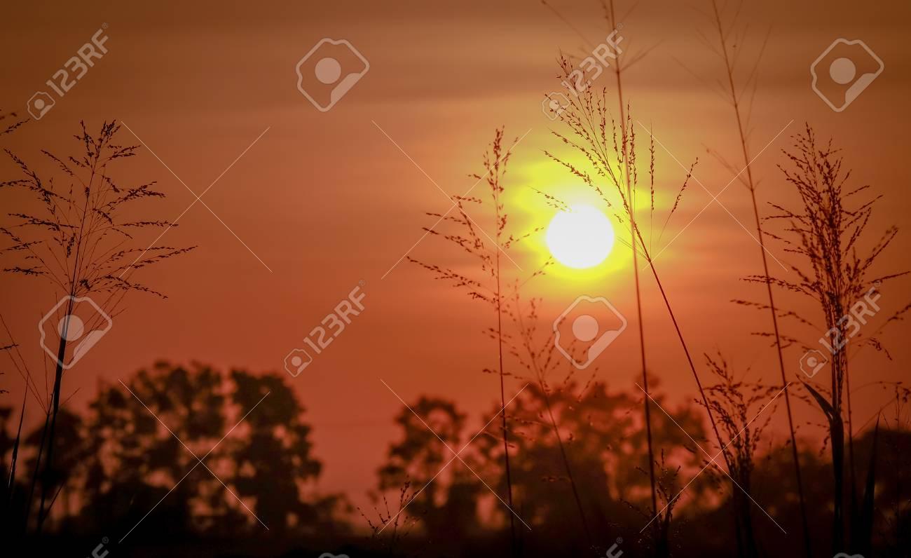 Wonderful Dramatic Scene Fantastic Sunrise Over The Meadow Stock