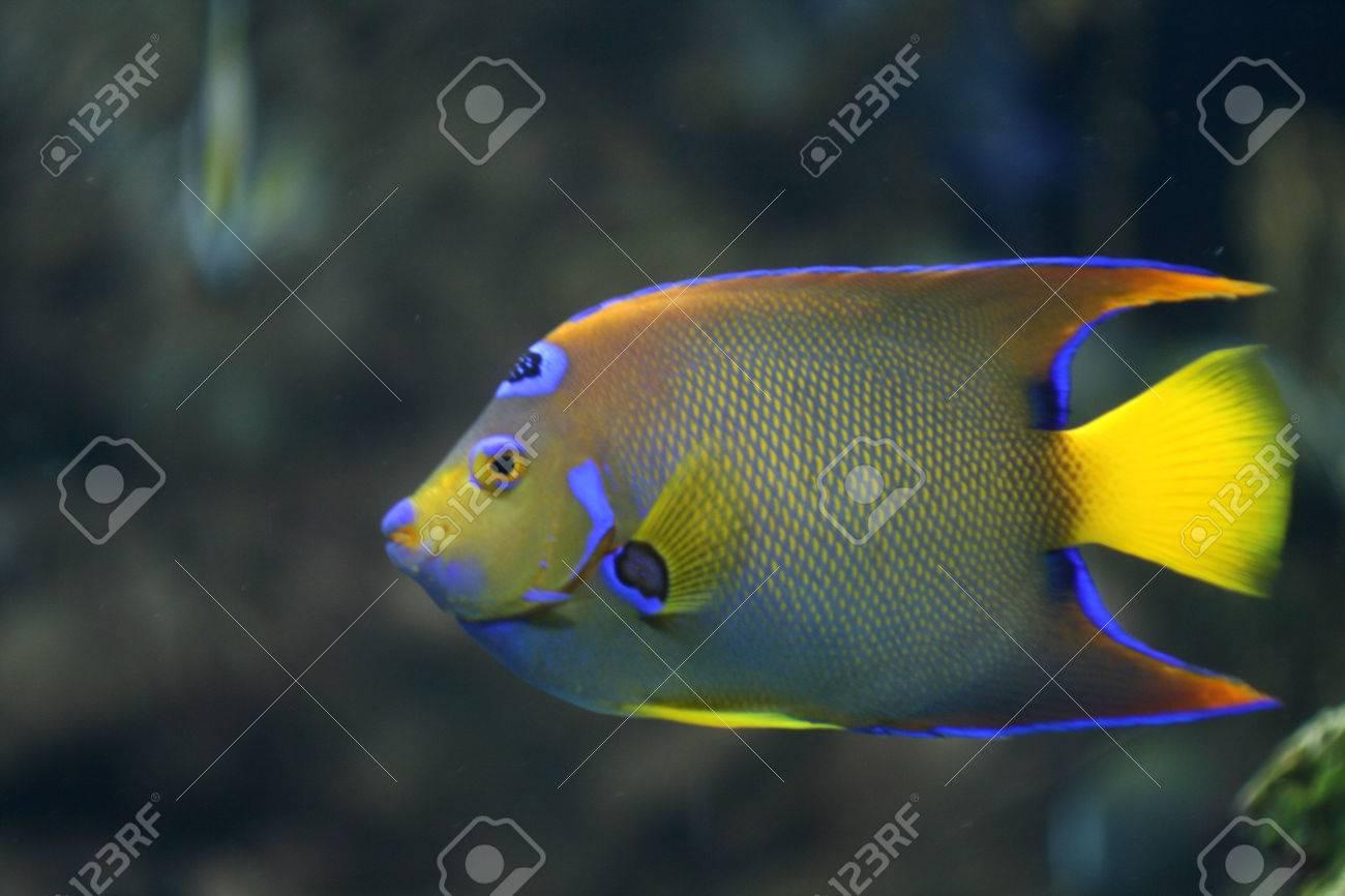 colores amarillo, azul, verde de neón de peces de coral Foto de archivo - 1518223