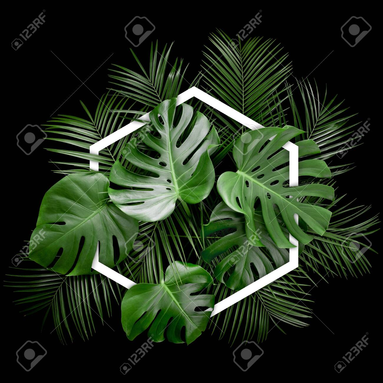 Creative Arrangement Of Tropical Monstera Palm Leaves With Hexagonal Stock Photo Picture And Royalty Free Image Image 121286752 Tropical rainforest plants that can be grown. 123rf com