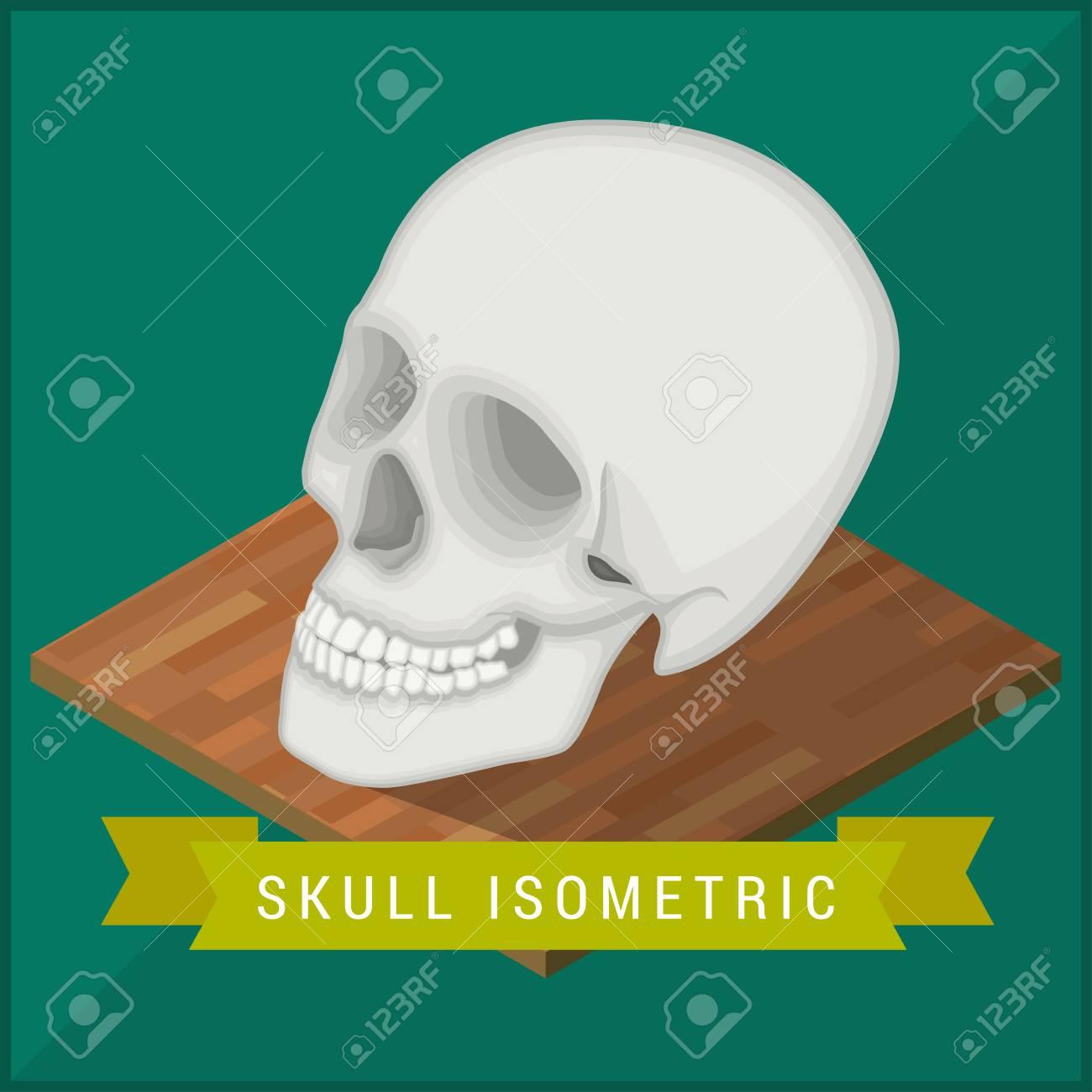 Cráneo Humano Plana Icono Isométrica. Cráneo Ilustración Vectorial ...