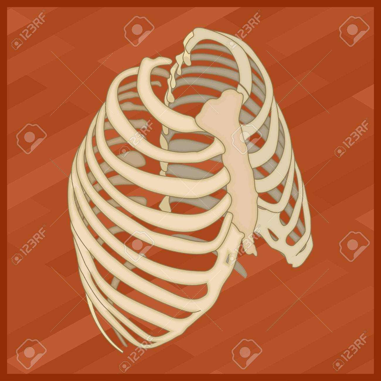 Human thorax flat isometric icon protextora bone rib cage or protextora bone rib cage or internal organs of thorax isometric ccuart Gallery