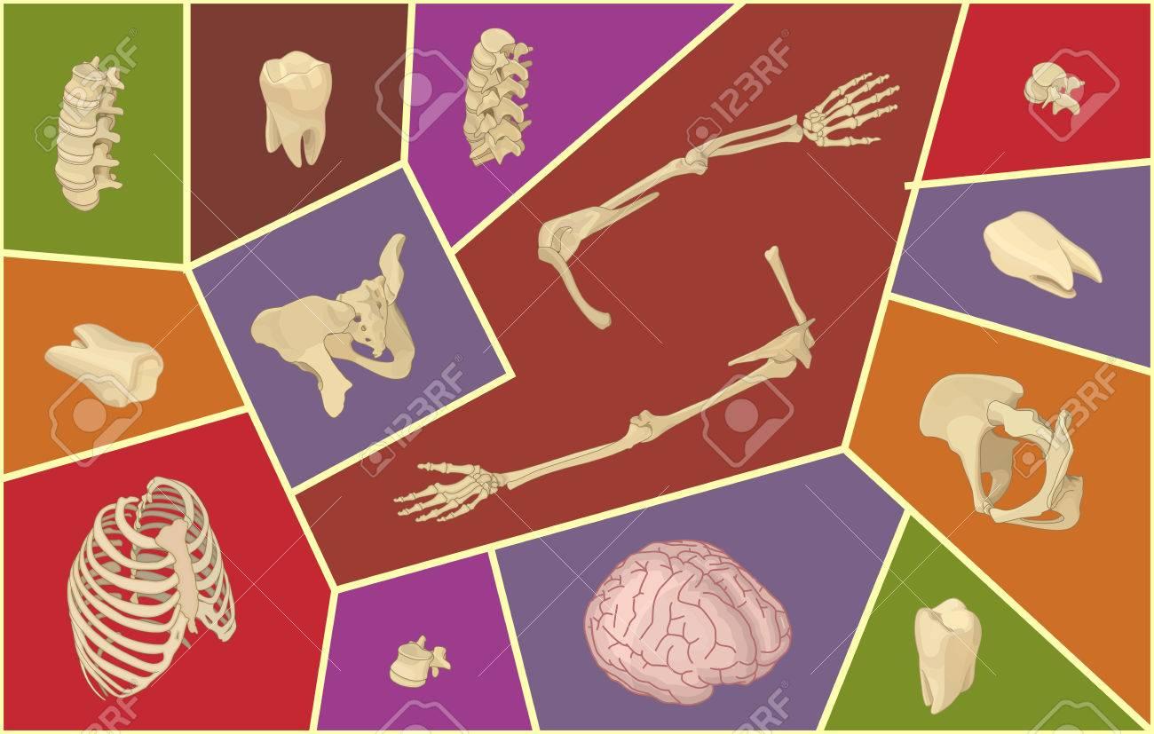 Ilustración Vectorial Isométrica Con Huesos Humanos. Conjunto ...