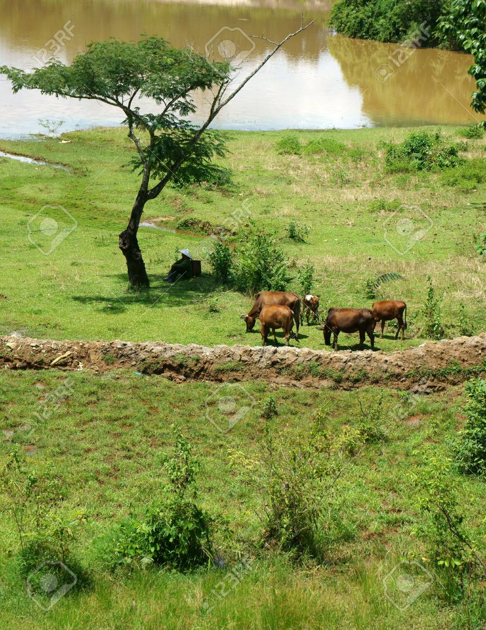 Highland area fit to rear oxen, and they often herd them everywhere to graze Stock Photo - 22056422