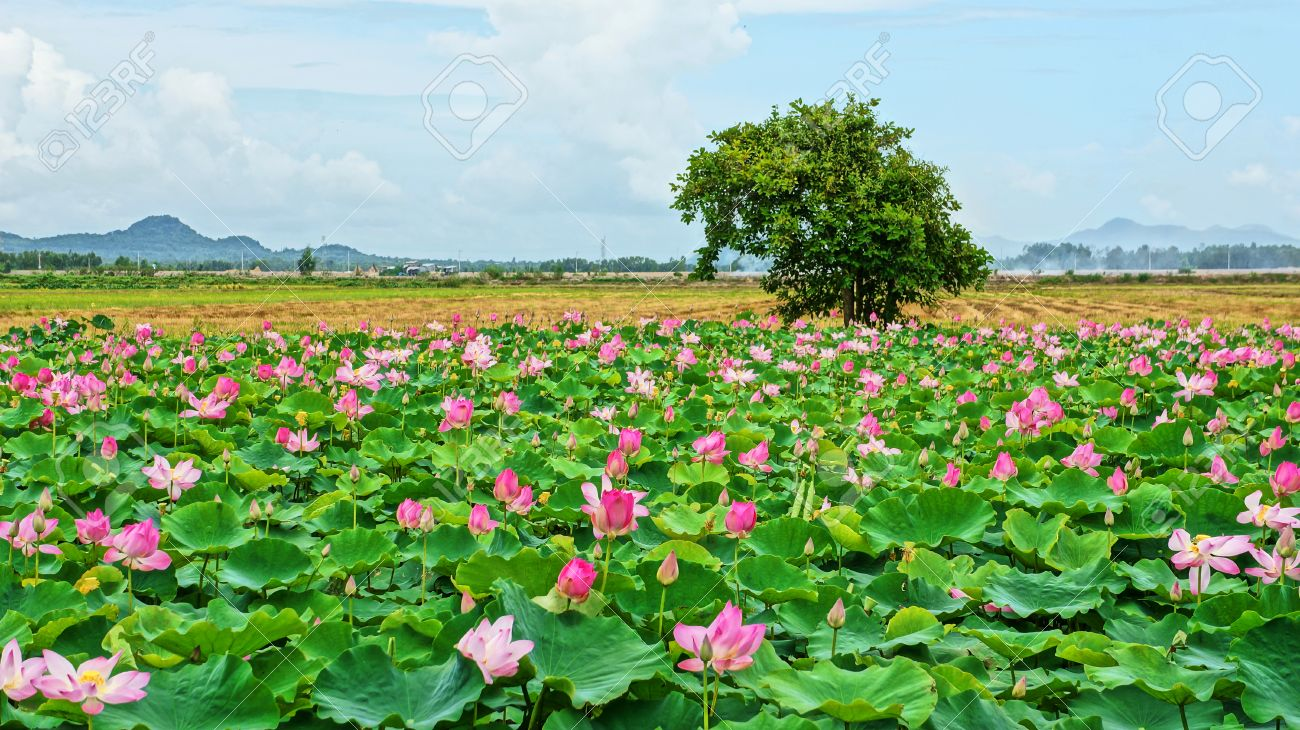 Vietnam Travel At Mekong Delta Impression Landscape Of Nature With