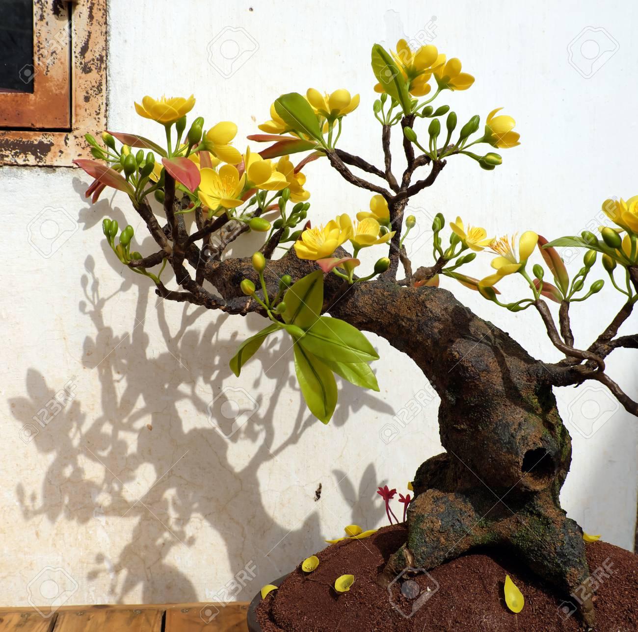 Vietnam Spring Flower For Home Decoration In Springtime Handmade