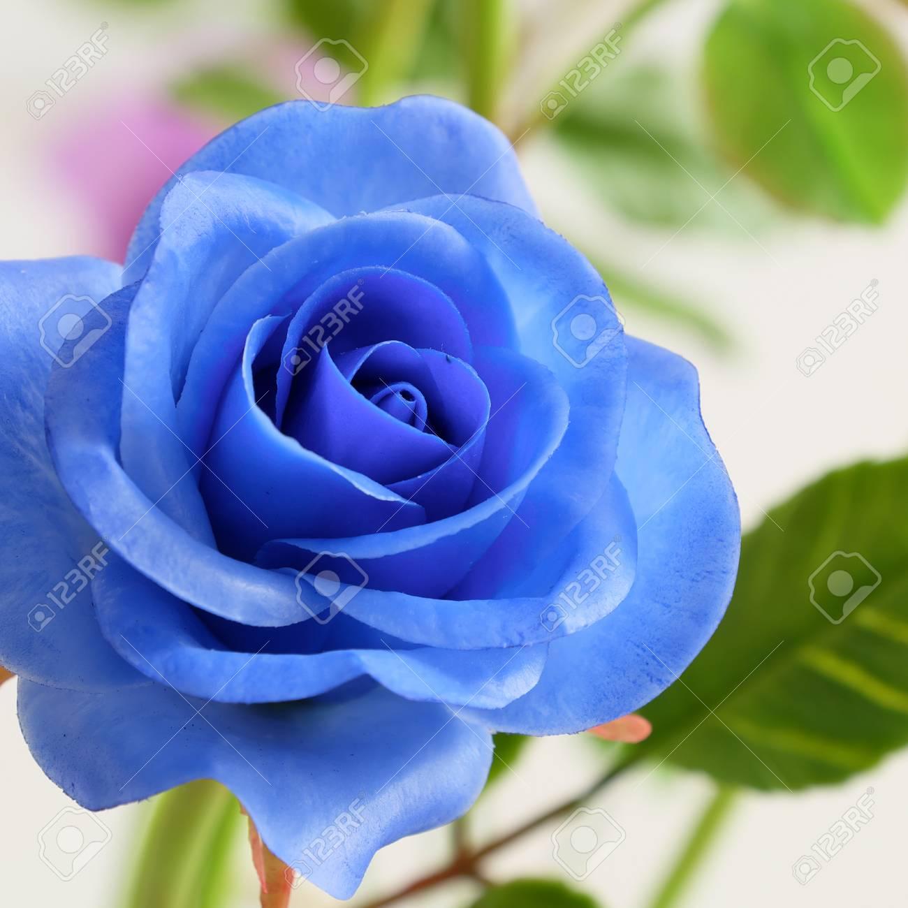 Wonderful Clay Art Close Up Of Blue Rose Flower Beautiful