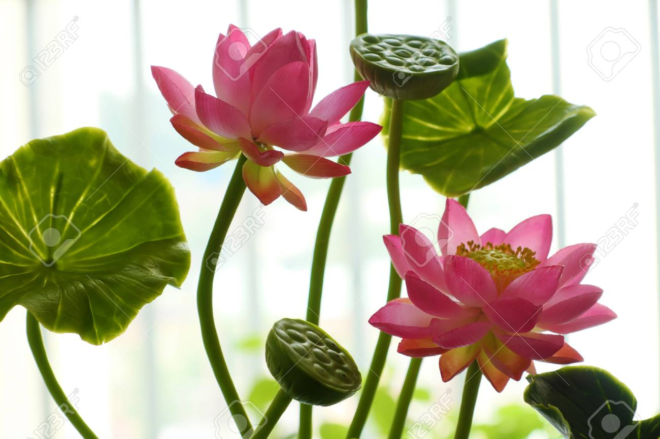 Art And Craft Product From Craftsmanship Pink Lotus Flower Pot