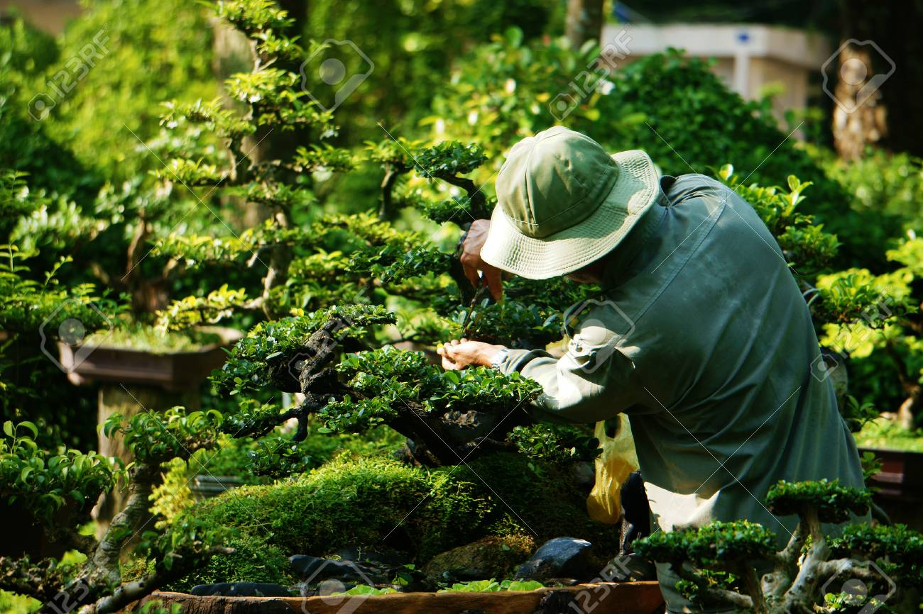 Tree care worker work on day at park of Ho Chi Minh city, Viet