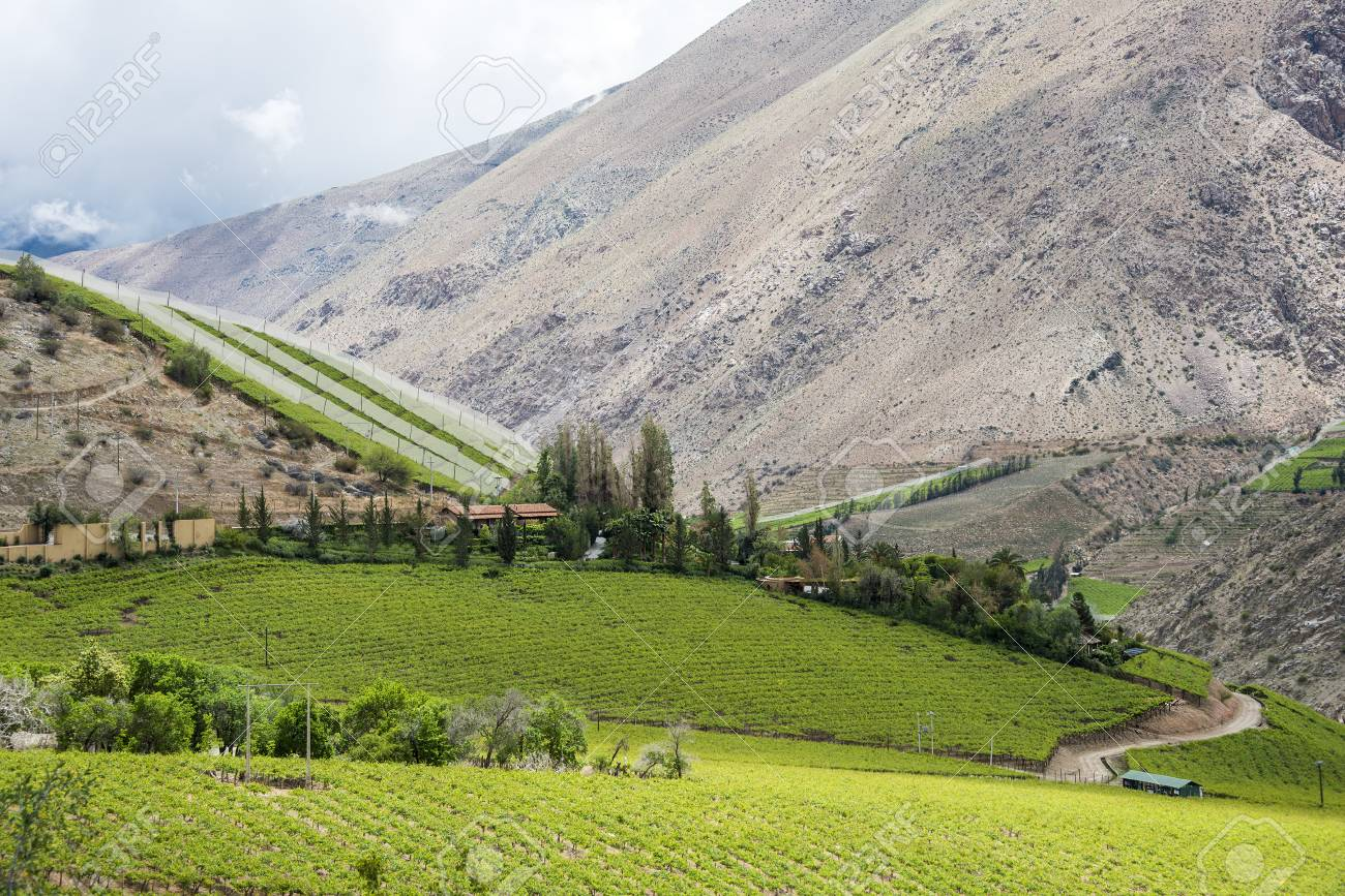 Spring Vineyard. Elqui Valley, Andes part of Atacama Desert in the Coquimbo region, Chile - 83604130