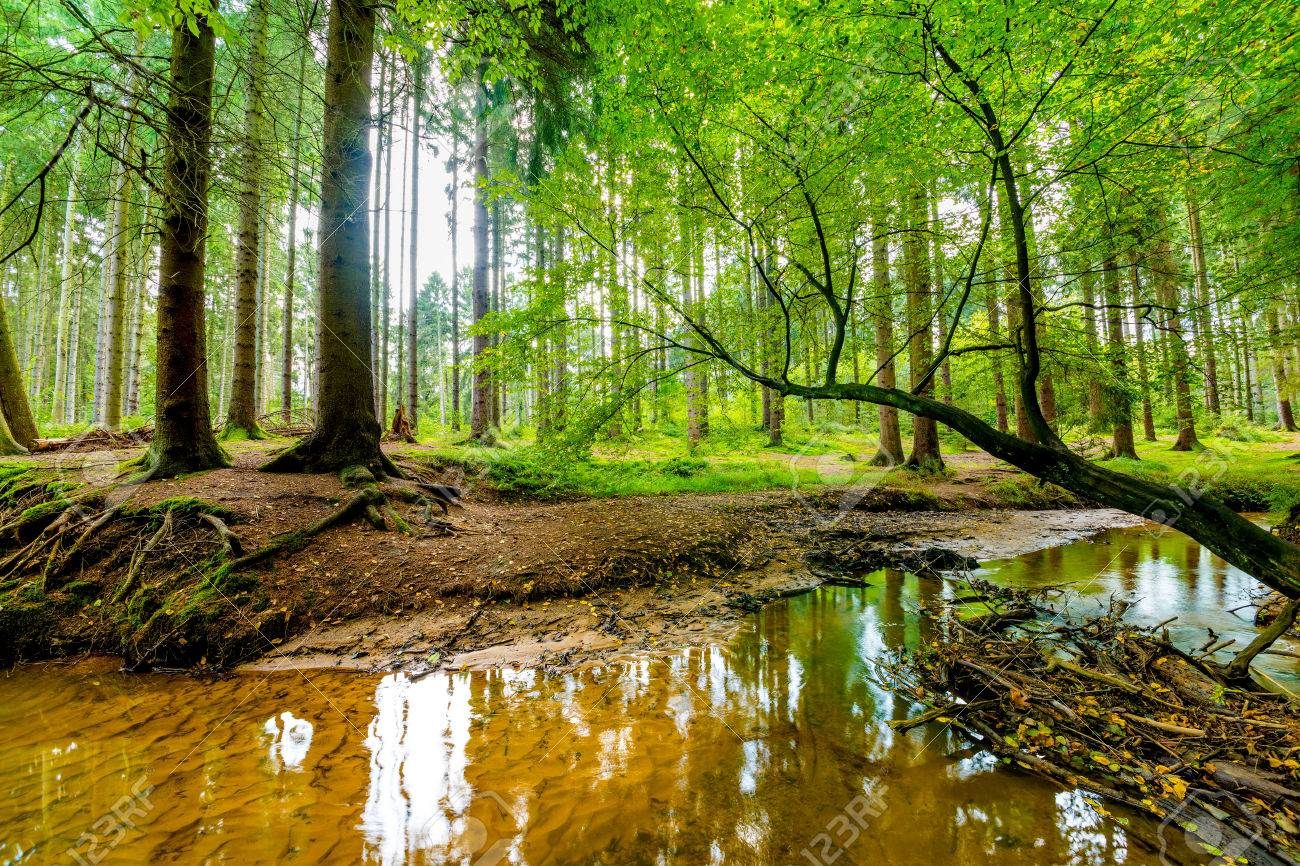 """Résultat de recherche d'images pour """"nature ruisseau foret vu générale"""""""